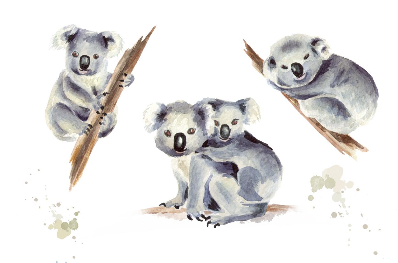 1251x826 Koala. Watercolor Collection