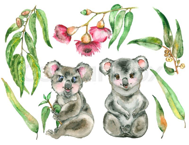 800x611 Watercolor Koala Set. Two Koala Bear And The Eucalyptus Branches