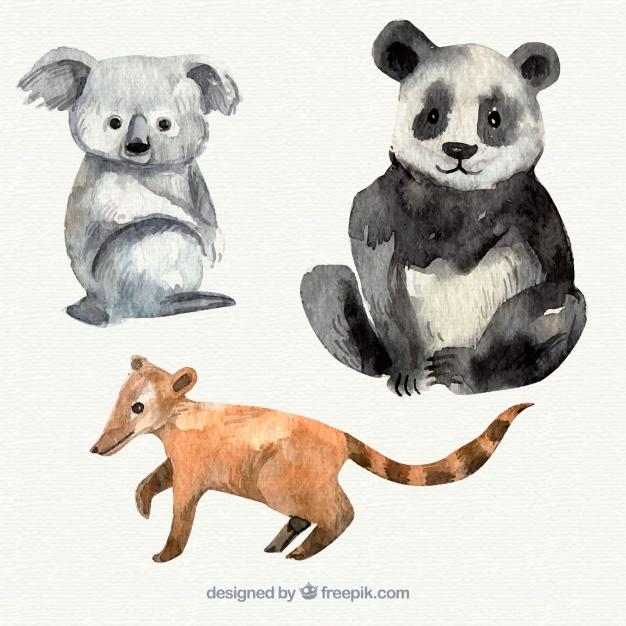 626x626 Watercolor Koala, Panda And Lemur Vector Free Download