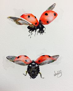 Watercolor Ladybug Tattoo at GetDrawings com | Free for