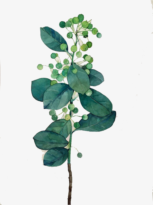 Watercolor Leaves at GetDrawings com | Free for personal use