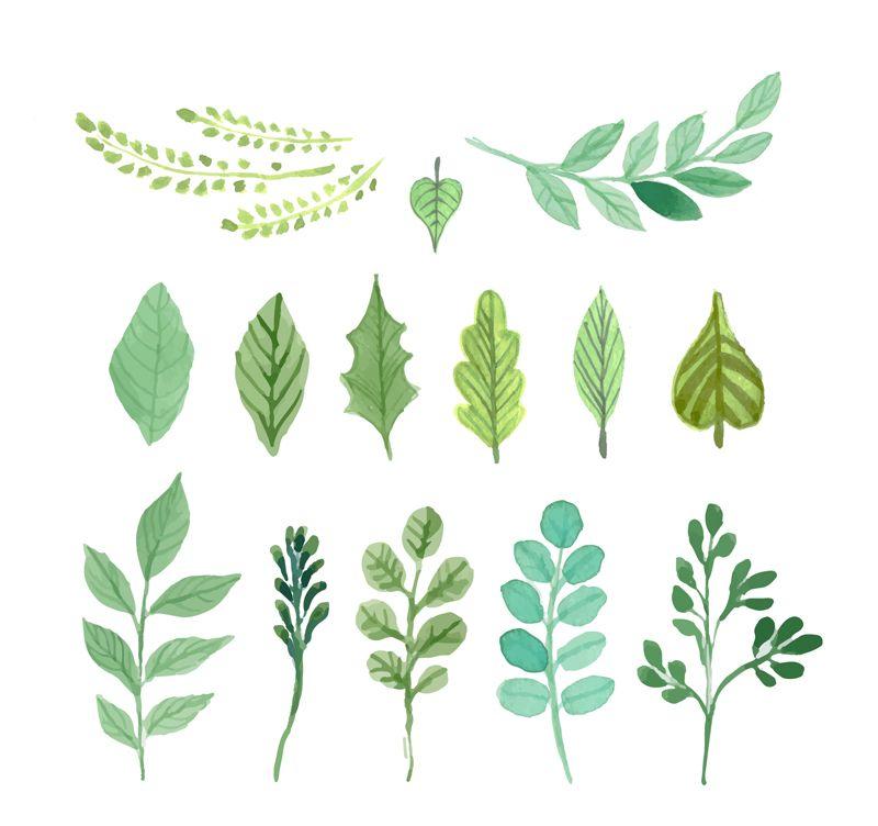 Watercolor Leaves Vector