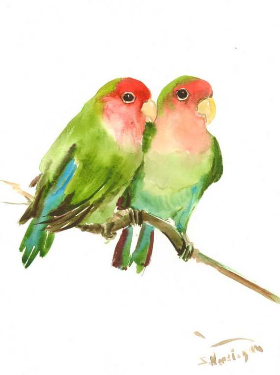 570x763 Love Birds Painting Lovely Lovebirds Original Watercolor Painting