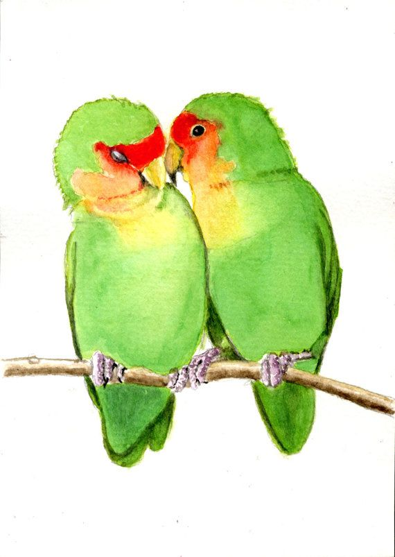 570x803 Peach Faced Lovebirds, 5x7 Print From Original By Earthspalette