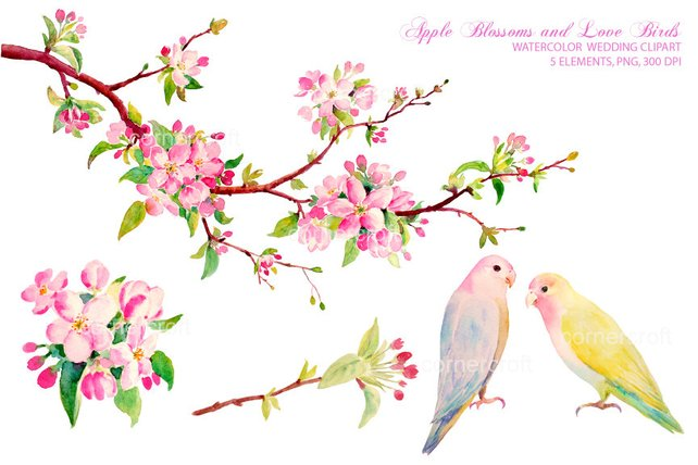 642x428 Watercolor Apple Blossoms And Love Birds Clipart For Instant Etsy