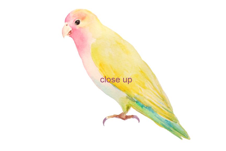 864x576 Watercolor Clipart Apple Blossom Love Birds By Cornercroft