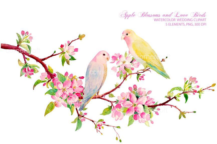 866x577 Watercolor Apple Blossom And Love Bird, Watercolor Clipart