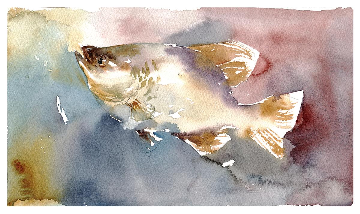 1200x713 Tasty Watercolor Fish In A Few Easy Steps! Citizen Sketcher