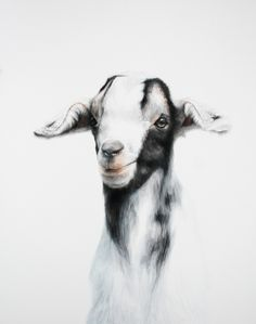 Watercolor Paintings Of Goats