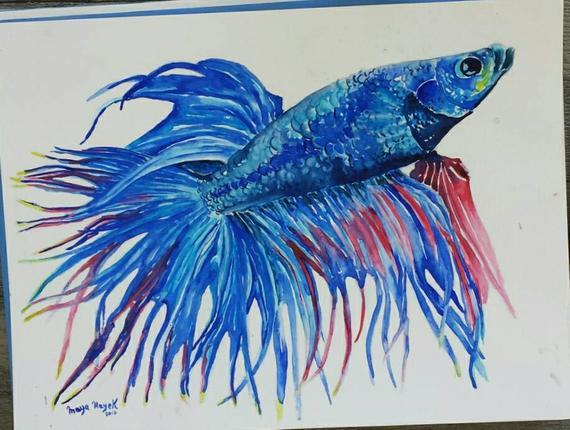 570x430 Betta Fish Painting Tropical Fish Watercolor Exotic Fish Etsy