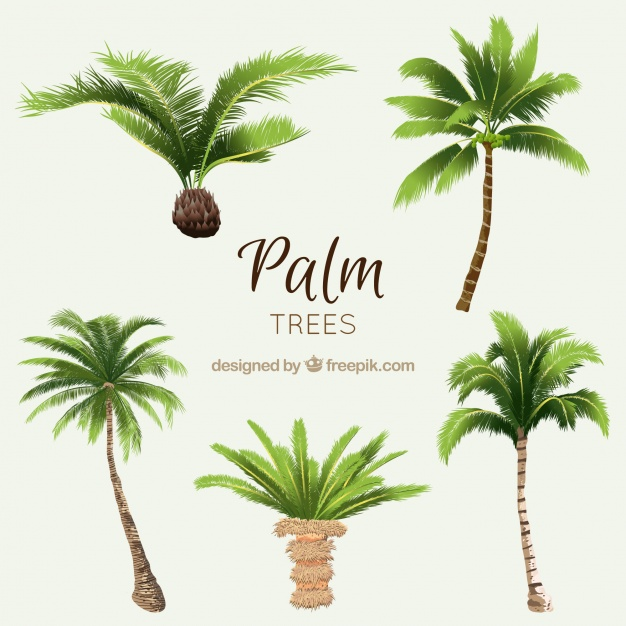626x626 Pack Of Watercolor Palms Vector Free Download