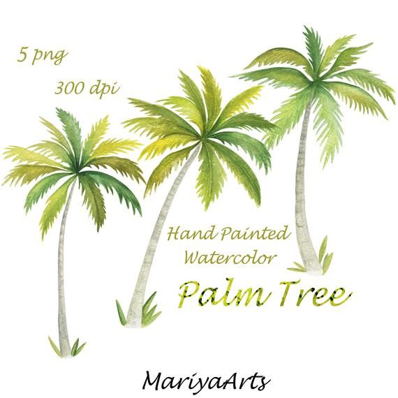 570x570 Palm Tree Clipart Watercolor Clip Art Hand Painted Double Etsy