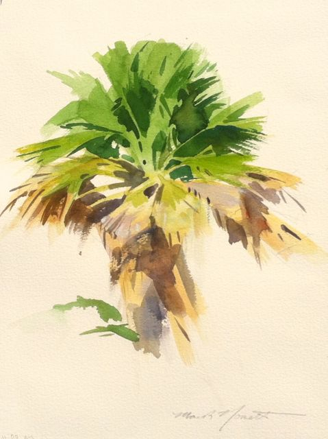 479x640 Palm Tree Study In Watercolor Mark Norseth Fine Paintings