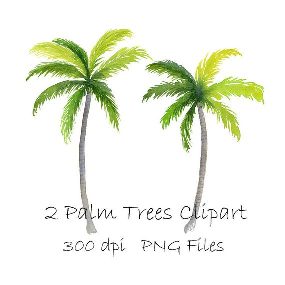 570x570 Watercolor Palm Tree Clipart Tropical Png Instant Download Etsy