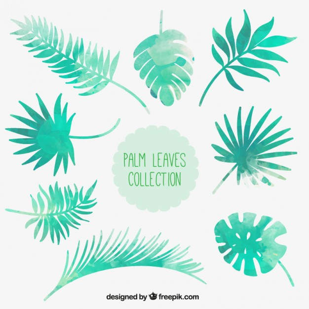 626x626 Watercolor Palm Leaves Collection Vector Free Download