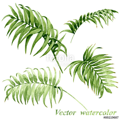 500x500 Watercolor Palm Leaves Isolated On White. Stock Image And Royalty