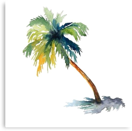 550x545 Watercolor Palm Tree Canvas Prints By Shannonfraney Redbubble