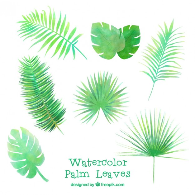 626x626 Watercolor Several Palm Leaves Vector Free Download