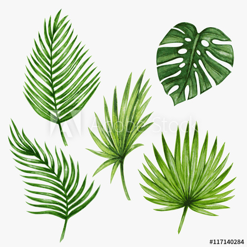 500x500 Watercolor Tropical Palm Leaves. Vector Illustration.