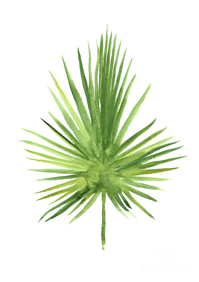 636x900 Fan Palm Leaf Tropical Tree Art Print, Green Leaves Watercolor