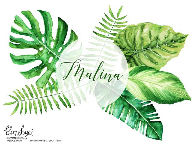 642x482 Tropical Leaves Clipart Watercolor Monstera Clipart Banana Etsy