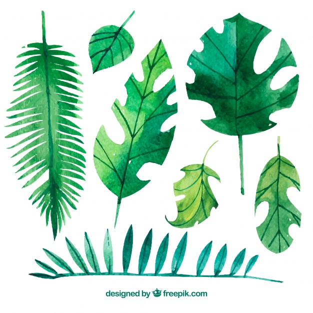 626x626 Variety Of Watercolor Palm Leaves Vector Free Download