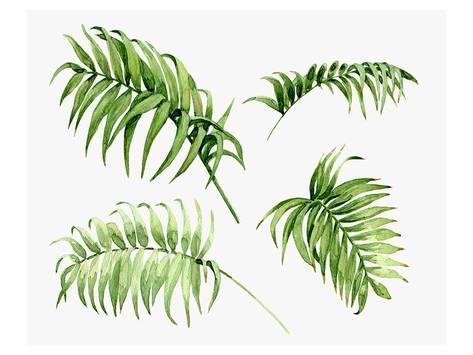 473x355 Watercolor Palm Leaves Prints