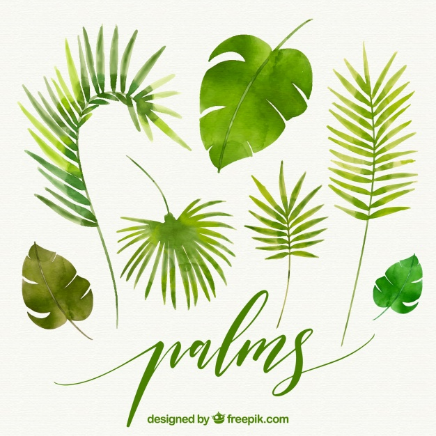 626x626 Leaves Of Watercolor Palms Vector Free Download