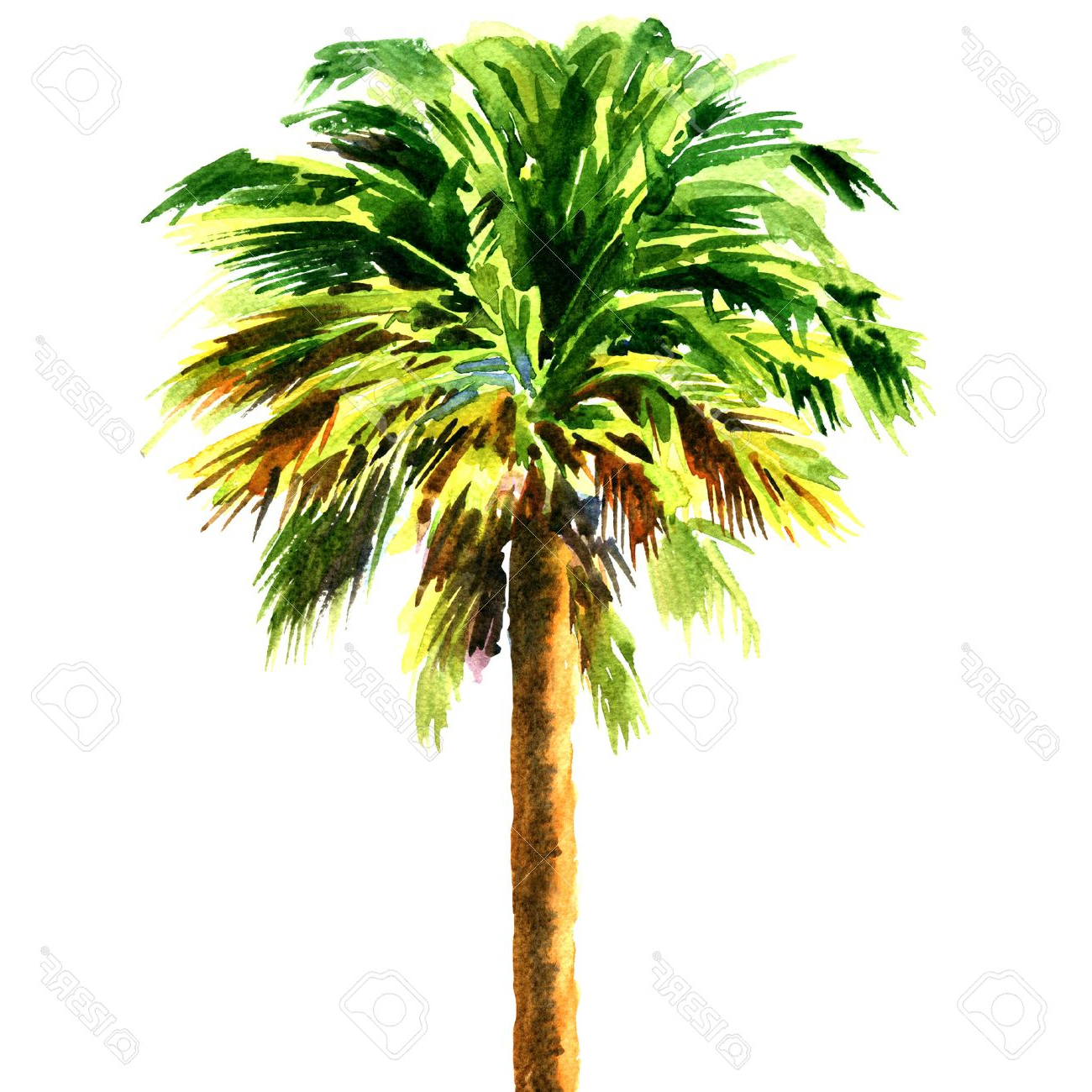 1300x1300 Painting Palm Trees In Watercolor Green Beautiful Palm Tree
