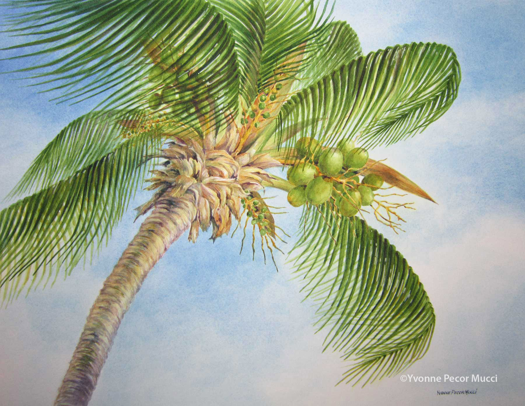 1800x1393 Palm Tree Watercolor Study Yvonne Pecor Mucci