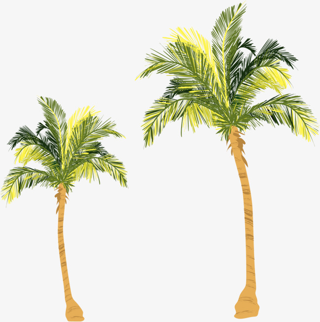 650x654 Vector Watercolor Coconut Tree, Watercolor Clipart, Coconut
