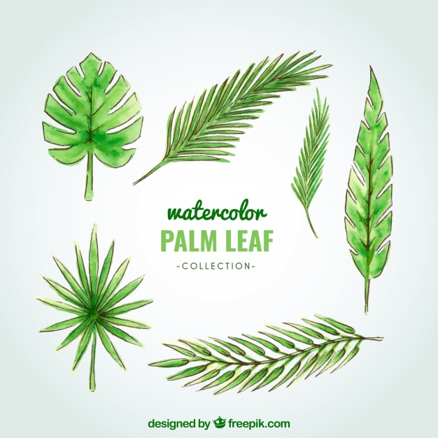 626x626 Watercolor Palm Tree Leaf Collection Stock Images