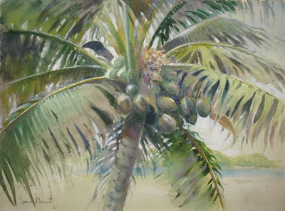 400x296 Fine Art, Sandor Bernath, Tropical, Coconut Palm, Watercolor