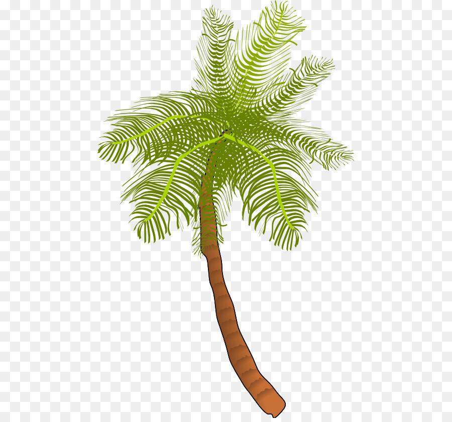 900x840 Coconut Arecaceae Tree Clip Art