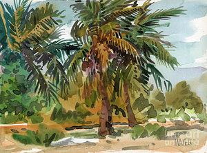 300x222 Coconut Trees Paintings Fine Art America