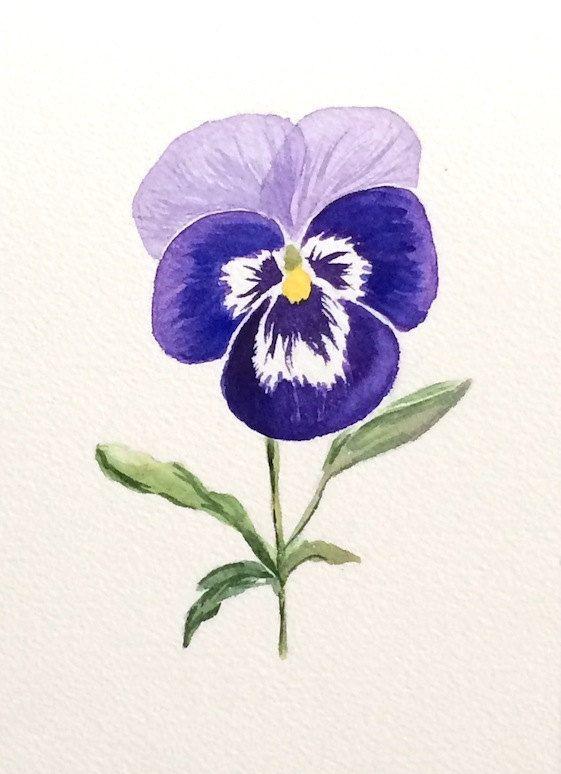 561x774 Original Watercolor Pansy, Original Pansy Art, 5x7, Purple Pansy