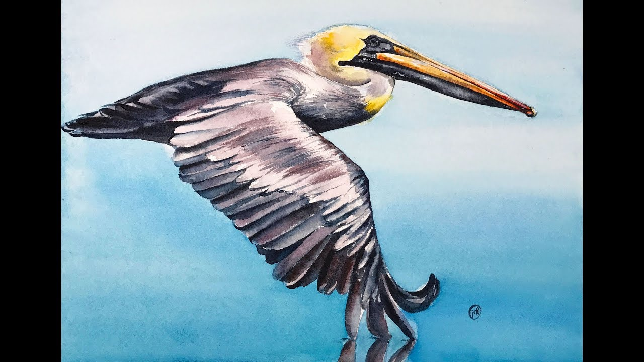 1280x720 Flying Pelican In Watercolors Painting Tutorial
