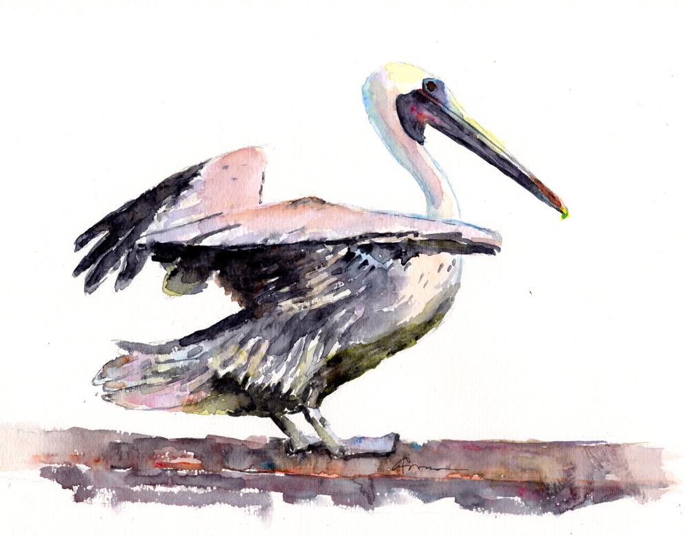 1000x777 Pelican Landing Watercolor Painting
