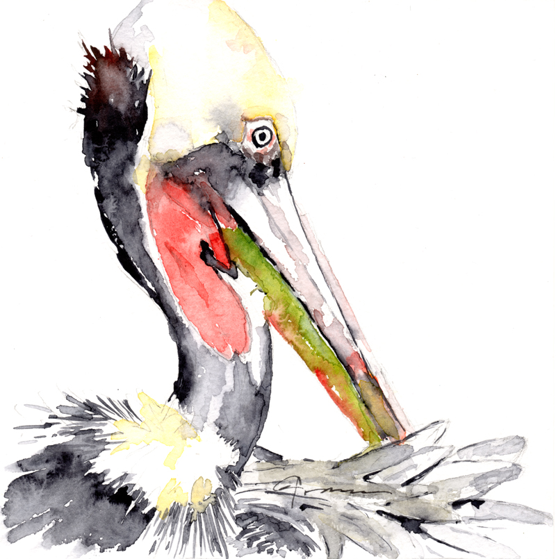 800x805 Pelican Watercolor Painting