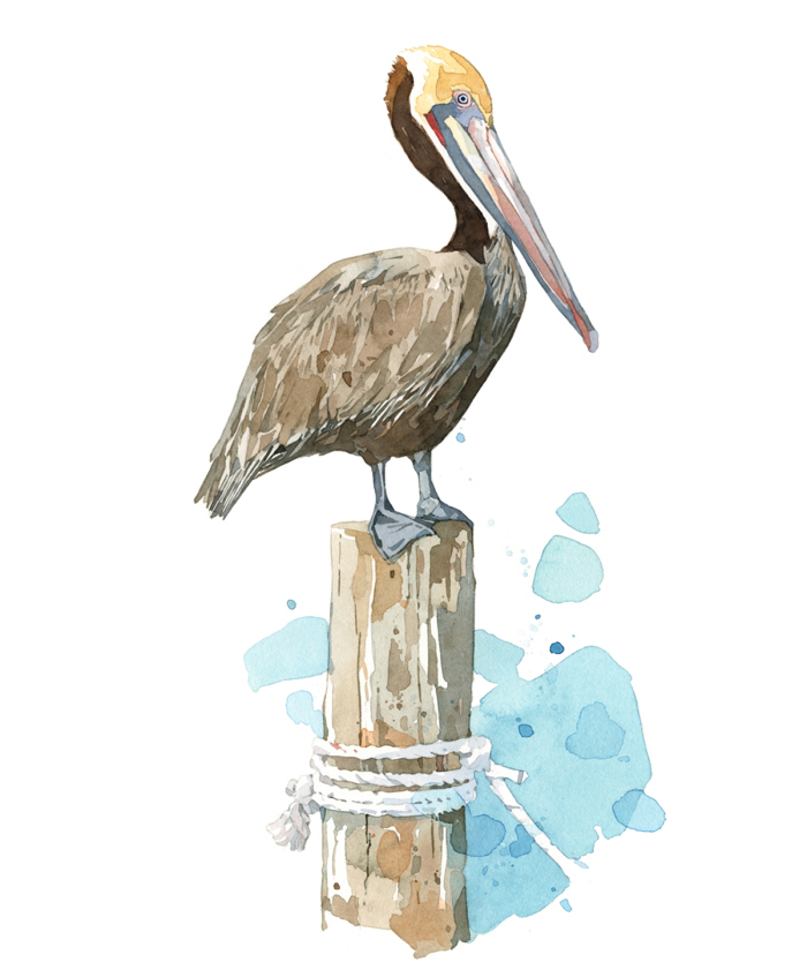 1600x1936 Pelican Watercolor Art Print, Coastal Wall Art David Scheirer