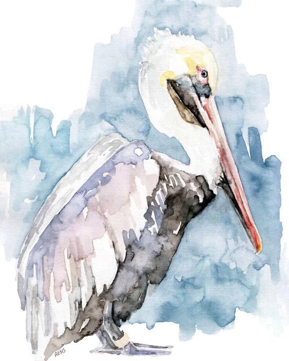 570x712 Watercolor Painting Pelican Painting Pelican Print Pelican Etsy