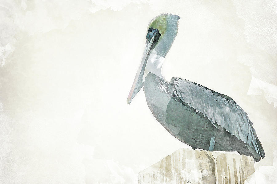900x600 Watercolor Pelican Painting By Lisa Hill Saghini