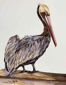 234x300 Brown Pelican Sitting On The Branch,sea Bird,ocean,original