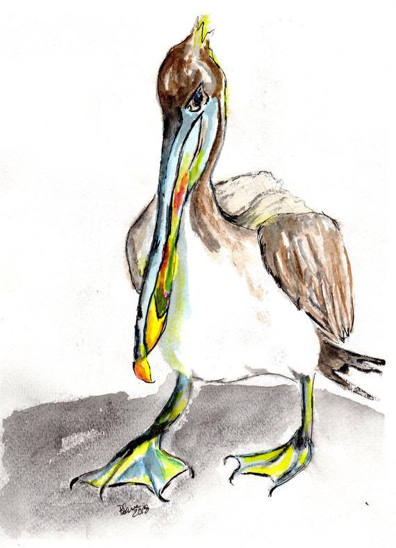 570x788 Brown Pelican Watercolor Painting. Pelican Beach Art In Etsy