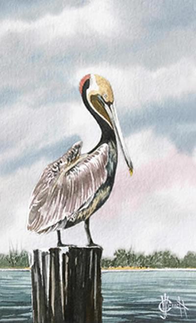 400x660 Brown Pelican