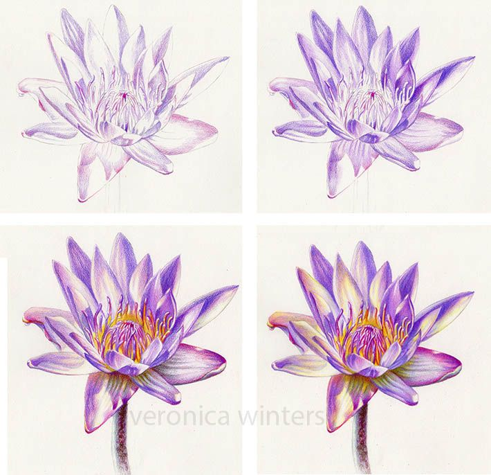 Watercolor Pencil Flowers