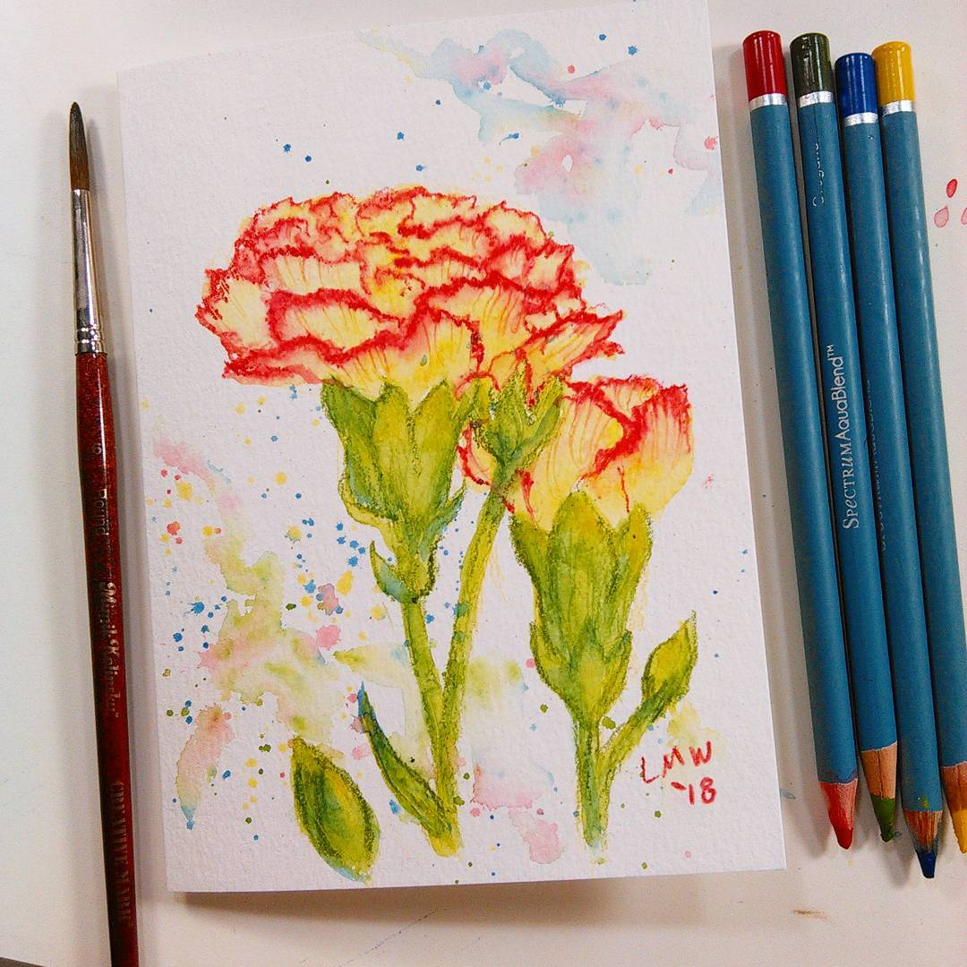 1080x1080 Easy Peasy Watercolor Pencil Project Carnations! The Frugal