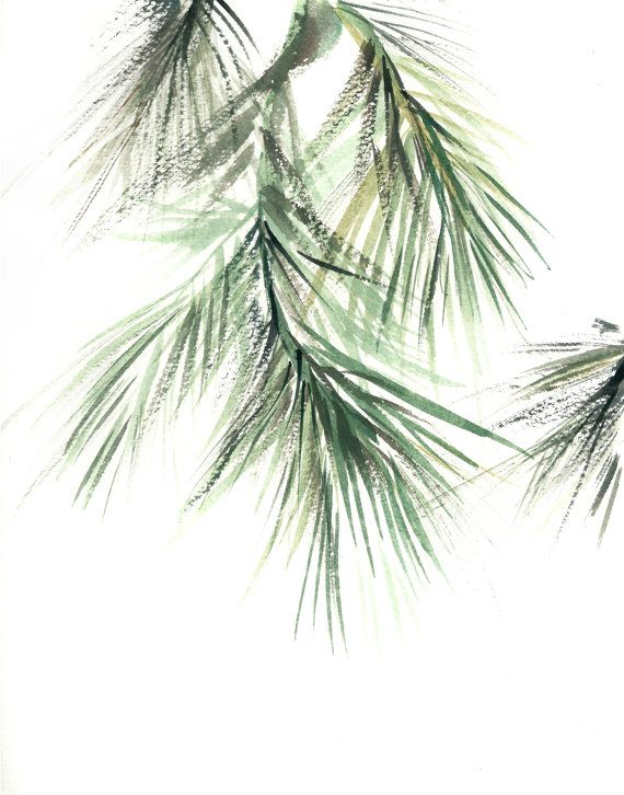 570x726 Pine Tree Branch Minimalist Fine Art Print, Botanical Watercolor