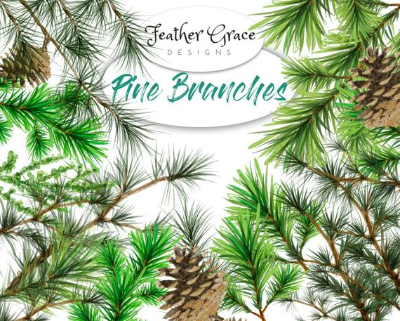 570x457 Pine Logo Watercolor Hand Painted Clipart Pine Branch Tree Etsy