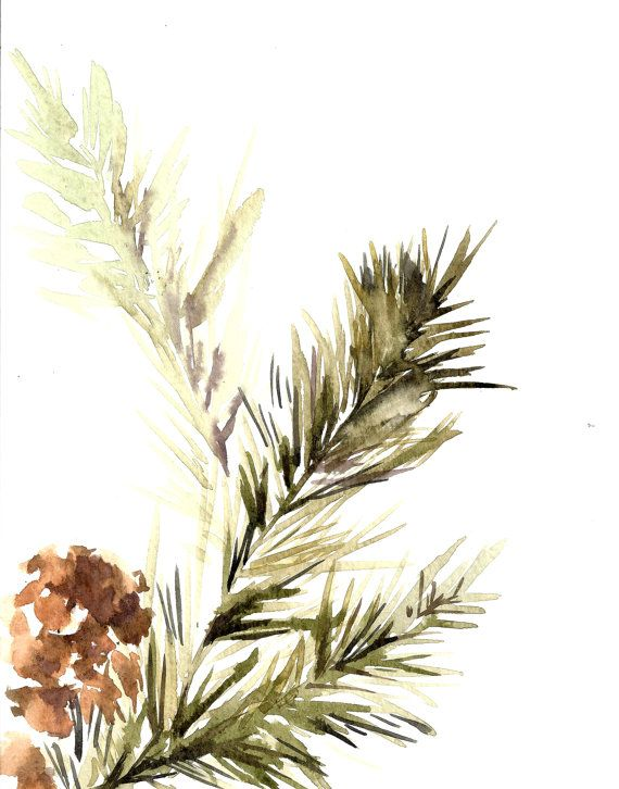 570x726 Pine Tree Branch With Pinecones, Watercolor Painting Art Print